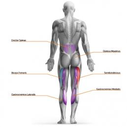 TMG meritev mišic